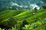 Bandarban-hill Tracts Tour
